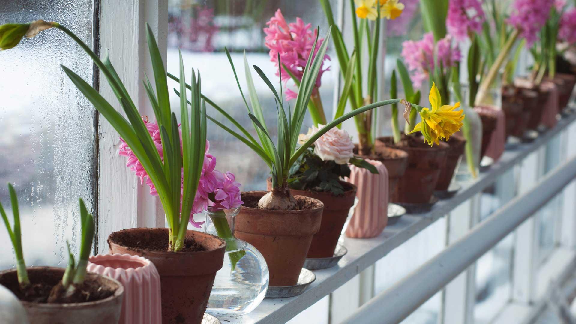 Le-piante-che-purificano-l'aria-dell'ufficio